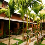 Palm  Garden in fron of the rooms